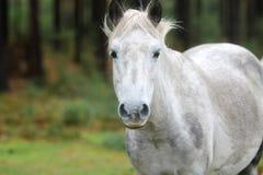 Nuovo cavallino della foresta fotografie stock