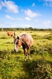 Nuovo cavallino della foresta su un campo verde Fotografie Stock Libere da Diritti