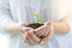 Nuovo concetto di crescita e di vita fotografia stock