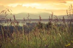 Nuovo concetto di giorno: alba vibrante di estate attraverso l'erba alta con i punti culminanti di giallo, le nuvole vaghe e la n Fotografie Stock
