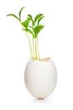 Nuovo concetto di vita con il semenzale e l'uovo Fotografia Stock
