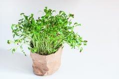 Nuovo eco dei becchi della pianta verde fotografia stock