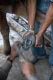 Nuovo ferro di cavallo Fotografie Stock