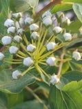 Nuovo fiore della molla fotografie stock libere da diritti