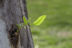 Nuovo foglio degli alberi Fotografia Stock Libera da Diritti