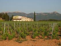 Nuovo giacimento della struttura delle vigne Immagine Stock
