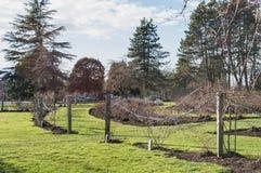 Nuovo giardino immagini stock