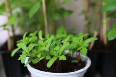 Nuovo giardino del vaso della pianta Immagine Stock