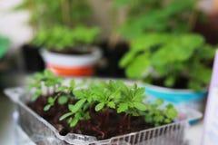 Nuovo giardino del vaso della pianta Immagini Stock