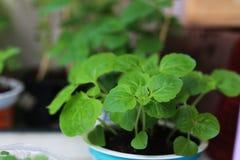 Nuovo giardino del vaso della pianta Fotografia Stock Libera da Diritti