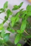 Nuovo giardino del vaso della pianta Fotografie Stock