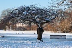 Nuovo inverno inglese Fotografie Stock Libere da Diritti