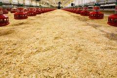 nuovo pollame dell'azienda agricola fotografia stock libera da diritti