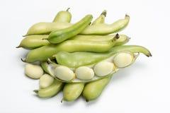 Nuovo raccolto delle verdure sane, grande vasto bea crudo fresco verde immagine stock