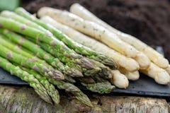 Nuovo raccolto di asparago bianco e verde di verdure nella stagione primaverile, asparago che cresce dalla terra sull'azienda agr fotografia stock
