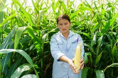 Nuovo rendimento del cereale nelle mani degli agricoltori fotografia stock