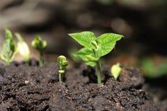 Nuovo semenzale di vita Immagini Stock Libere da Diritti