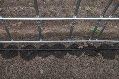 Nuovo sistema dell'irrigazione a goccia in serra Fotografia Stock Libera da Diritti