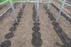 Nuovo sistema dell'irrigazione a goccia in serra Fotografia Stock