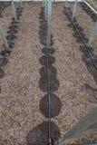 Nuovo sistema dell'irrigazione a goccia in serra Fotografie Stock