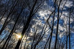 Nuovo tramonto della gola del fiume della Virginia dell'Ovest attraverso gli alberi fotografia stock libera da diritti