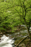 Nuovo verde della sorgente Fotografia Stock Libera da Diritti