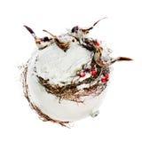 Nuovo Year& x27; composizione in s dagli uccelli, dalle ceneri di montagna, dalla neve e da un wh Fotografia Stock Libera da Diritti