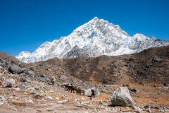 Nuptse peak, Trekking in Everest region, Nepal. View of Nuptse peak on the way to Gorakshep, Trekking in Everest region, Nepal Stock Photo