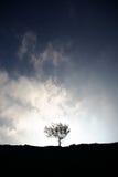 Nur Baum Stockfotos