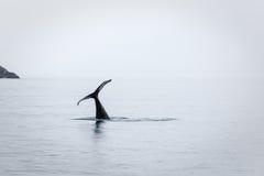 Nur das Endstück bleibt, während Schwertwal oder Killerwal verschwindet Lizenzfreies Stockbild