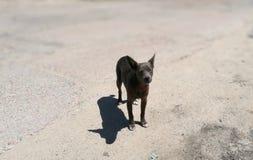 Nur ein Hund Lizenzfreie Stockfotos
