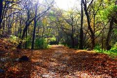 Nur eine Zufahrtsstraße im Wald Stockbild