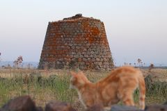 Nuraghe and cat Stock Image