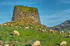 Nuraghe and herd of sheep in springtime. Sardinia, Italy stock photo