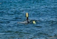 Nurek jest flippers zdjęcie royalty free