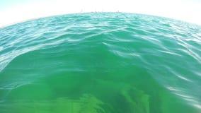Nurek nad woda, dopatrywanie i mknący rywalizaci regatta jachty, Portugalia Algarve zbiory