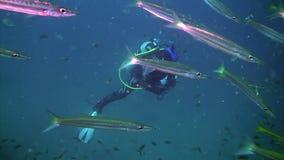 Nurek unosi się w tle duże ilości ryba - igły undwewater zbiory