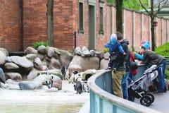 Nuremberg Tyskland, April 2016: Föräldrar med barn som besöker en zoo Nuremberg Hållande ögonen på pingvin och häger för folk royaltyfri fotografi