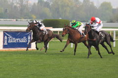 Nurjaz in horse racing in Prague Stock Photo