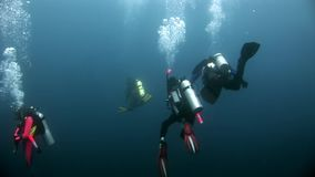 nurków akwalungu underwater zdjęcie wideo