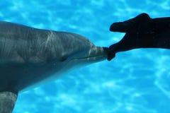 nurka delfinu cieków target2525_1_ Obraz Royalty Free