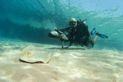 nurka promienia hulajnoga żądła underwater fotografia royalty free