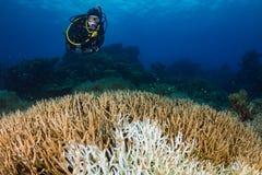 Nurkować nad bielącymi koralami zdjęcia stock