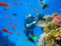 Nurkować przy rafami koralowa w Egipt zdjęcie royalty free