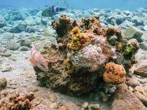 Nurkować w podwodnym rafa koralowa świacie zdjęcie stock