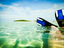 Nurkować w morze Zdjęcie Stock