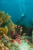 Nurkowie i morscy zwierzęta fotografia royalty free