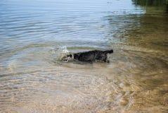 Nurkowy pies zdjęcia royalty free