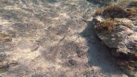 nurkowy underwater Czerwony denny Egipt zbiory wideo