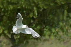 nurkujący biel Zdjęcie Stock
